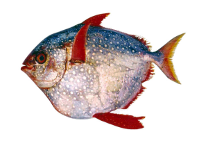 fish ID quiz October 14