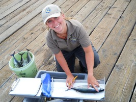 CRFS fisheries technician collecting data