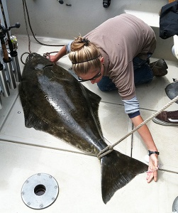 CDFW staff measures Pacific halibut