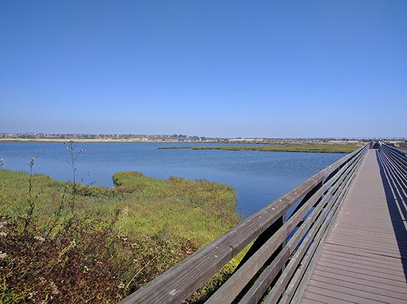 Chica California's AreasBolsa Wetlands Marine Protected Exploring nwO8vmN0