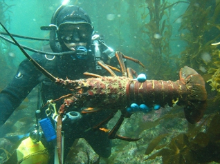 diver with lobster