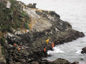 intertidal research