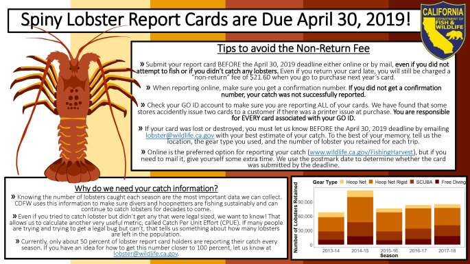report card tips