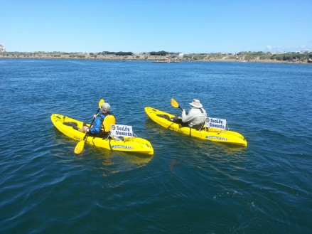 Sea Life volunteers in kayaks