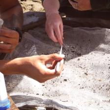 people sorting through estuary sample materials
