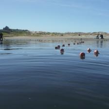 net across Ten Mile Estuary SMCA