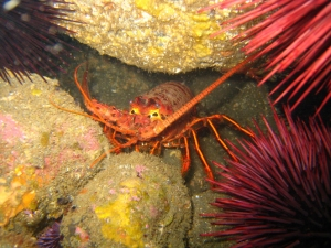 urchins and lobster