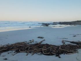 beach wrack