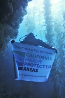 diver with banner