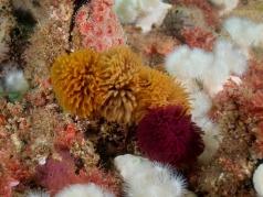 worms, anemones, sponges