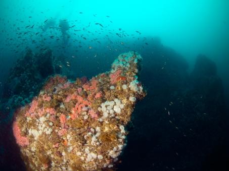 Divers at Begg Rock