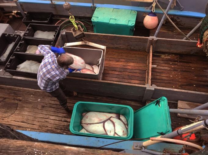 offloading commercial halibut