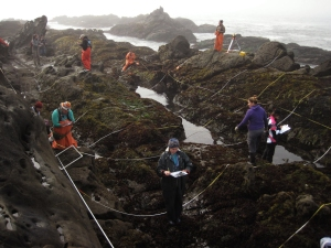 researchers in intertidal zone